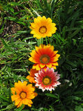 Bright flowers. Flowers, aster, bright, summer, nature, plants, Spain stock images