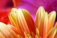 Bright flowers background Royalty Free Stock Images