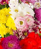 Bright flowers Royalty Free Stock Photos