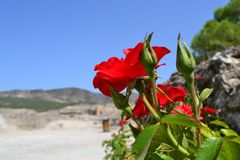 bright flowers of the dead Hierapolis in Turkey Royalty Free Stock Photos