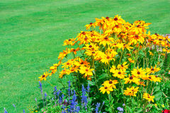 Bright flowers on the flowerbed Stock Image