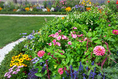 Bright flowers on the flowerbed. Royalty Free Stock Image