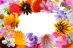 Bright flowers frame Royalty Free Stock Images