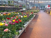 Bright flowers in a Garden centre. Royalty Free Stock Photography