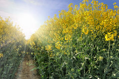 Bright flowers of. Row of blossoming under the sun`s ray royalty free stock photography