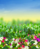 Bright flowers in summer garden Stock Image