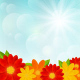 Bright flowers on sunny background Stock Photography