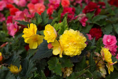 Bright flowers which grow on the street Royalty Free Stock Photography