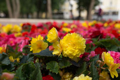 Bright flowers which grow on the street Stock Photos