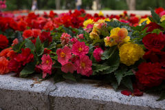 Bright flowers which grow on the street Stock Images