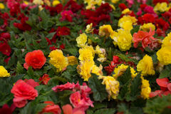 Bright flowers which grow on the street Royalty Free Stock Photos