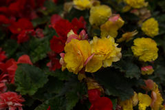 Bright flowers which grow on the street Stock Image