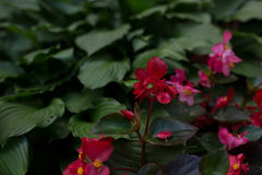 Bright flowers which grow on the street Royalty Free Stock Images