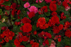 Bright flowers which grow on the street Royalty Free Stock Photo