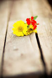 Bright flowers on a wooden bench Royalty Free Stock Photo