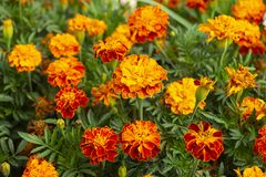Bright flowerses on background of the green herb Royalty Free Stock Image