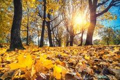 Bright foliage in autumn park. Bright foliage in sunny autumn park Stock Photo