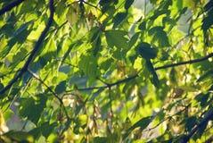 Bright foliage in the sunlight.  Stock Image