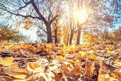 Bright foliage in autumn park Royalty Free Stock Photo