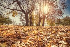 Bright foliage in autumn park Stock Photography