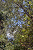Bright foliage. A warm summer, quiet, full color on the Danube We see banks, islands, floodplain forests. The sky seen through the thick foliage of the forest stock images
