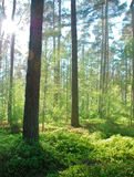 Bright forest Stock Photos
