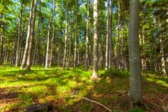 Bright forest at summer in national park Royalty Free Stock Photography