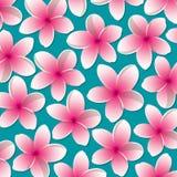 Bright frangipani pattern Stock Photography