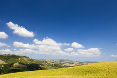 Bright and fresh field with sunflowers Stock Images