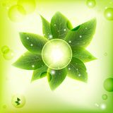 Bright fresh green leaves  background Stock Images