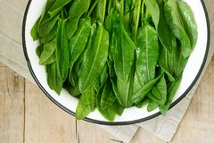 Bright fresh leaves of sorrel in a bowl of water. Rustic style. Bright fresh leaves of sorrel in a bowl of water. Rustic style, selective focus stock images