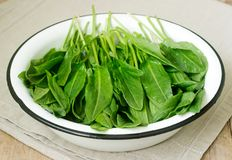Bright fresh leaves of sorrel in a bowl of water. Rustic style. Bright fresh leaves of sorrel in a bowl of water. Rustic style, selective focus stock photo