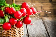 Bright fresh organic radishes with leaves. In a basket Royalty Free Stock Photos
