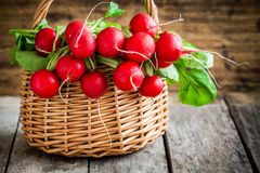Bright fresh organic radishes with leaves. In a basket Stock Photo