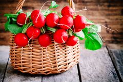 Bright fresh organic radishes with leaves Royalty Free Stock Photography