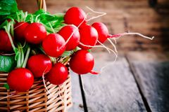 Bright fresh organic radishes with leaves Stock Photo