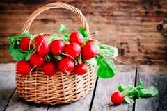 Bright fresh organic radishes with leaves Royalty Free Stock Image