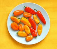 Bright, fresh pepper on the blue plate Royalty Free Stock Photography