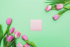 Bright fresh pink tulips and piece of paper on light green background royalty free stock images