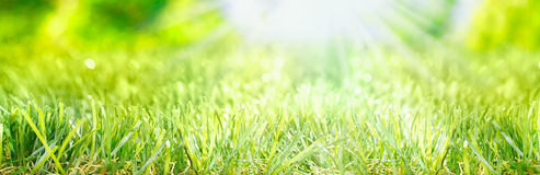 Spring banner. Bright fresh Spring banner with rays of light from a sunburst shining on a lush grassy green meadow royalty free stock photos