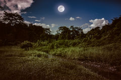 Bright full moon above wilderness area in forest, serenity natur. Landscape of night sky with clouds. Beautiful bright full moon above wilderness area in forest Stock Photos