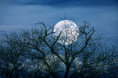 Bright full moon with spooky tree branches background Stock Images