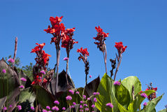 Bright Garden Flowers Against the Sky Royalty Free Stock Photography