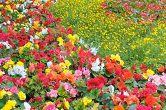 Bright garden flowers Royalty Free Stock Photos