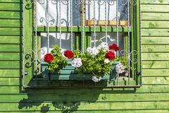 Bright geranium flowers on the window of a green wooden house, closeup. Horizontal royalty free stock images