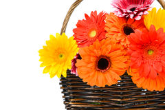 Bright gerber flowers in the basket Stock Photo