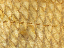 Bright golden fish scales Royalty Free Stock Photos