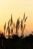 Bright golden grass flower beside railroad in sunset. Light Royalty Free Stock Image