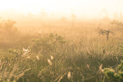A bright, golden landscape of a marsh after the sunrise. Bright, white light pouring over the scenery. Beautiful swamp in Northern Europe Stock Photos