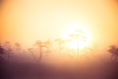 A bright, golden landscape of a marsh after the sunrise. Bright, white light pouring over the scenery. Beautiful swamp in Northern Europe Royalty Free Stock Images